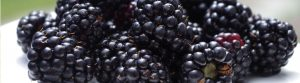 Blackberries Lynden
